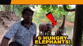 WATCH: 6 Elephants are starving in Collem , owner wants help!