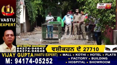 Chandigarh के बाद अब Mohali में भी दिखा तेंदुआ, सुनिए Police की Announcement