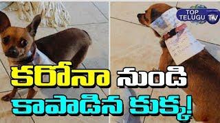 కరోనా నుండి కాపాడిన కుక్క ! | Mexico Dog Service Against Present Issue | Lockdown | Top Telugu TV