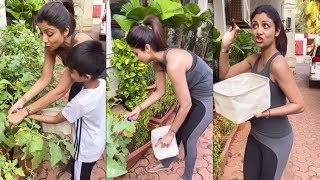 Shilpa Shetty plucking tomatoes from Garden । 9 April 2020 । News Remind