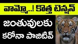 వామ్మో..! కొత్త టెన్షన్ | Peoples Gets New Problem | Lock Down India | Top Telugu TV