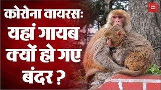 Coronavirus: Lockdown में अचानक कहां गायब हो गए शिमला के बंदर?