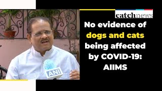 No evidence of dogs and cats being affected by COVID-19: AIIMS | Coronavirus News | Catch News