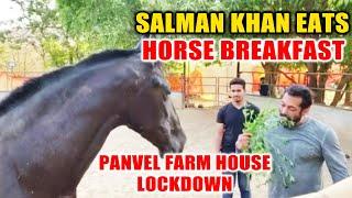 Salman Khan Having Breakfast With His Horse At Panvel Farm House