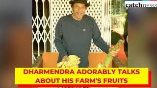 Dharmendra Is All Excited To Eat Fruits From His Farm; Thanks Fans For Good Wishes   Catch News