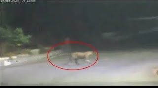 Leopard Crossing Road In Hyderabad | CCTV Goes Viral | Fake Video Trends | @ SACH NEWS |