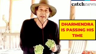 Watch How Veteran Actor Dharmendra Is Passing His Time Amid Lockdown | Catch News