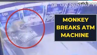 Watch How Monkey Breaks ATM Machine In Delhi   Latest News In English   Catch News