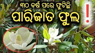 Parijata Flower in Baripada, Mayurbhanj |Exclusive