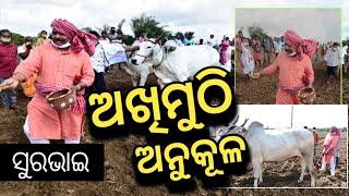 MLA Sura Routray celebrates Akshaya Tritiya | ଦେଖନ୍ତୁ କେମିତି ଅଖିମୁଠି ଅନୁକୂଳ କଲେ ସୁର ଭାଇ