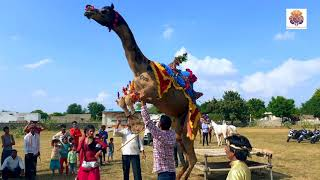 New Dj Rasiya || अगर मगर मत बोल - Agar Magar Mat Bol || Rajasthani sekhawati