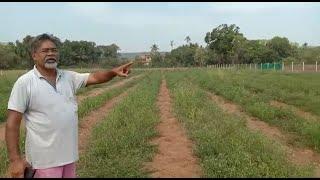 Crop raids cause huge losses to farmers of Korgao