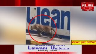 Hyderabad News // A Leopard Attacked a Lorry Driver....तेंदुआ ने ड्राइवर पर हमला किया