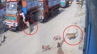 అదిగో చిరుత..!! | Leopard @ Hayath Nagar CCTV Video | Leopard In Hyderabad | Top Telugu TV