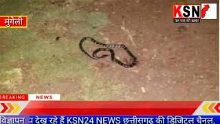 मुंगेली/क्वाटेंटाइन सेंटर में सो रहे युवक को जहरीले सांप ने काटा......