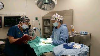 कारोना वायरस (COVID-19) से पीड़ित मरीज की हालत कैसी हो जाती है देखें ?? कृपया इसे हल्के में ना लें