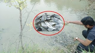 पुर विडियो जरुर देखे : The Man Has Give Food For Fish And Show The Humanity,