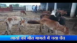 HEADLINES गायों की मौत पर बयानबाजी 20 Aug 1pm