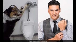 Akshay Kumar Teaches His Dog How To Flush After Using The Toilet