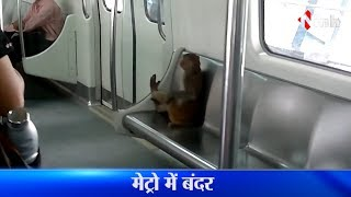 Monkey In Metro, Viral Video