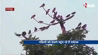 Pravasi / Migratory birds in Ratanpur, Chhattisgarh - ठण्ड के आते ही प्रवासी पक्षियों का लगा जमावड़ा