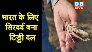 भारत के लिए सिरदर्द बना टिड्डी दल | जयपुर के बाद अब झांसी पहुंचा टिड्डी दल |#DBLIVE