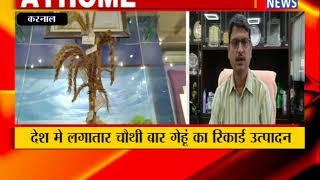 करनाल : देश मे लगातार चौथी बार गेहूं का रिकार्ड उत्पादन ! ANV NEWS HARYANA