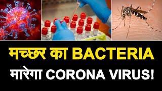 मच्छर का BACTERIA बनेगा 'कोरोना का काल', अमेरीकी और चीनी शोधकर्ताओं ने किया दावा