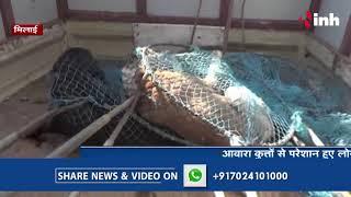 Bhilai News:Bhilai में लोगों ने खुद ही पकड़े आवारा कुत्ते, रायपुर मंत्रालय के पास छोड़ने की योजना
