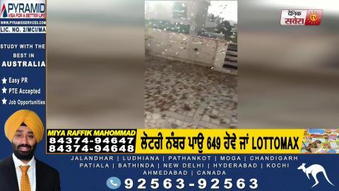 Bollywood Actor Dharmendra ने की Tiddi -Dal की Video Share बोले सावधान रहिए