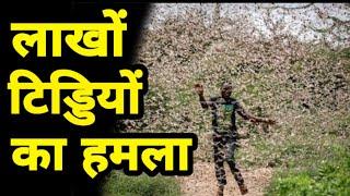 भारत के किसानों पर टिड्डी दल का हमला, वीडियो में कैद हुआ सारा सच   Locust Swarm Attack