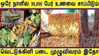 Locust Attack | ஒரே நாளில் 35,000 பேர் உணவை தின்று தீர்க்கும் | Locust Attack In India | Locust