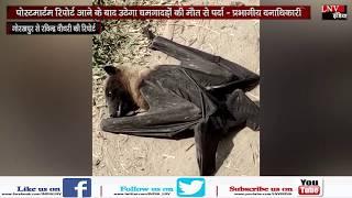 पोस्टमार्टम रिपोर्ट आने के बाद उठेगा चमगादड़ों की मौत से पर्दा - प्रभागीय वनाधिकारी