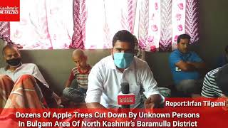 #SpecialStory:Dozens Of Apple Trees Cut Down By Unknown Persons In Bulgam Area Of Baramulla