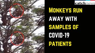 Monkeys Run Away With Blood Samples Of Suspected COVID-19 Patients | Catch News