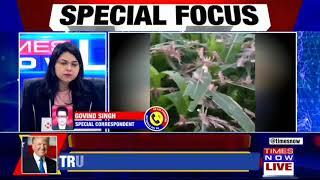 Watch: Locust army moves to Uttar Pradesh via Jhansi