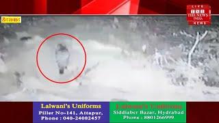 Hydrabad news हैदराबाद में नज़र आया तेंदुआ