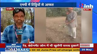 Locust Alert || Chhattisgarh - Madhya Pradesh टिड्डी से बर्बादी