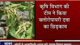 Locust Attack in Lucknow | लखनऊ पहुंचा टिड्डियों का दल