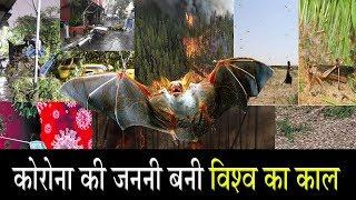 एमपी में चमगादड़ों की शामत आई...लोगों में भय का माहौल ! Bat Died