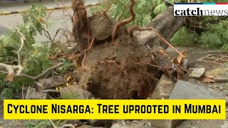 Cyclone Nisarga: Tree Uprooted In Mumbai's Hutatma Chowk | Latest News In English | Catch News