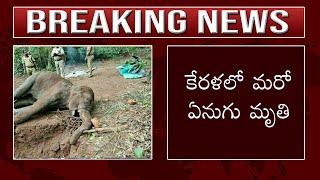 కేరళలో మరో ఏనుగు మృతి | Again Sad News From Kerala State | Elephant Leave her Life | Top Telugu TV