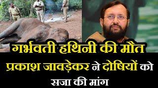 Kerala Elephant Incident | गर्भवती हथिनी की मौत, प्रकाश जावड़ेकर ने दोषियों को सजा की मांग