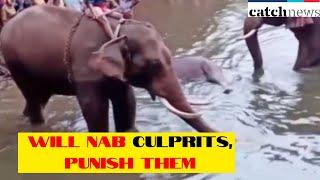 Will Nab Culprits, Punish Them: Prakash Javadekar On Killing Of Elephant In Kerala | Catch News