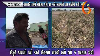 Gujarat News Porbandar 04 06 2020