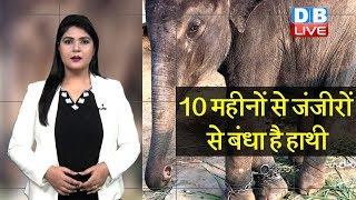 10 महीनों से जंजीरों से बंधा है हाथी | महावत को मिल गई जमानत |#DBLIVE