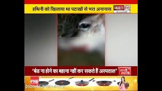 हिमाचल प्रदेश में गर्भवती गाय को खिलाया विस्फोटक, उड़ा जबड़ा
