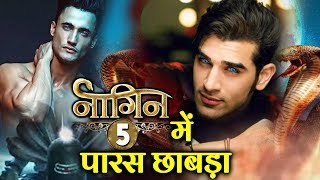 NAAGIN 5 | After Asim, Paras Chhabra News Goes Viral; To Play The Male Lead In Ekta Kapoor's Show?