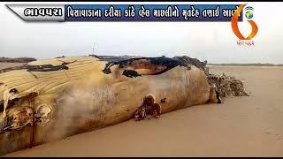 BHAVPARA વિસાવાડાના દરીયા કાંઠે વ્હેલ માછલીનો મૃતદેહ તણાઇ આવ્યો 06 06 2020