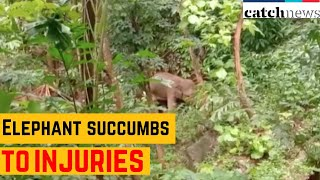 Elephant Succumbs To Injuries In Kerala's Malappuram | Latest News In English | Catch News